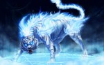 Fantasy_Maltese_Blue_Tiger